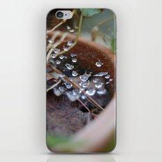 water's web iPhone & iPod Skin