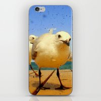 Seagulls - number 4 from set of 4 iPhone & iPod Skin