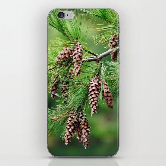 Pine cones iPhone & iPod Skin