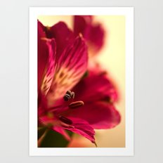 {lily the pink} Art Print
