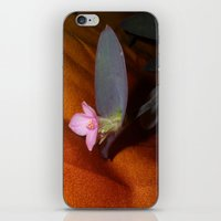 Purple Spiderwort on Orange iPhone & iPod Skin