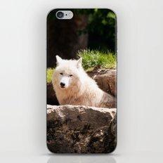 Canis Lupus Arctos iPhone & iPod Skin