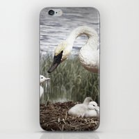 Tom Feiler Swan and her Cygnets iPhone & iPod Skin