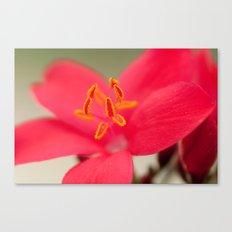 Pastel Flower 196 Canvas Print