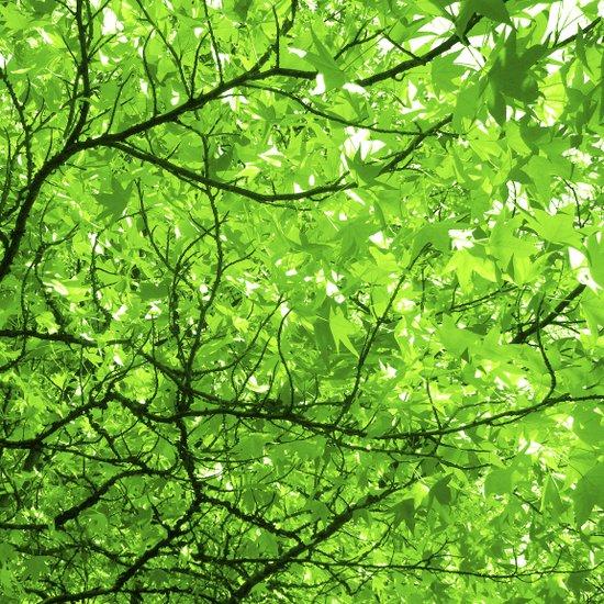 green spring tree II Art Print