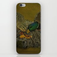 Mallards Having A Meal iPhone & iPod Skin