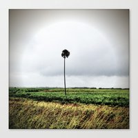 I'm a lonely palm Canvas Print