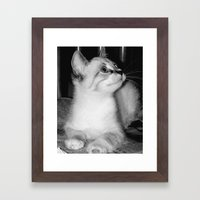 Curious Kitty Framed Art Print