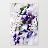 Vanilla Blue Canvas Print