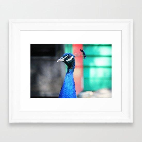 Peacock 1 Framed Art Print