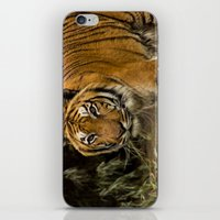 Bengal Tiger iPhone & iPod Skin