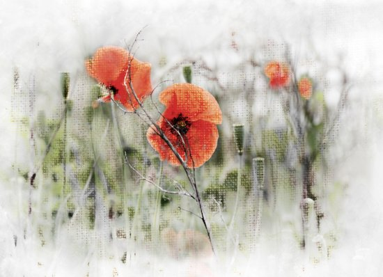 Poppies(mist). Art Print