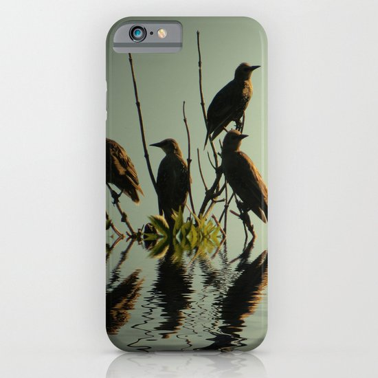 Starling Sunset iPhone & iPod Case