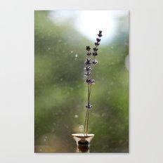 A Pair of Lavender Flowers Canvas Print