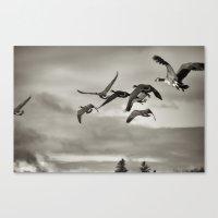 Geese In Flight ,  Finge… Canvas Print
