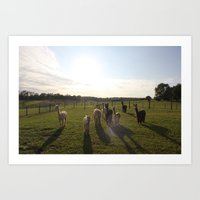 Alpaca Shadows Art Print