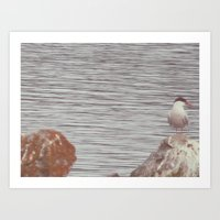 lake bird Art Print