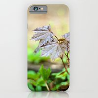 Baby Maple iPhone 6 Slim Case