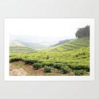 Tea Fields::rwanda Art Print