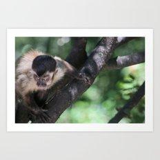 Ferocious Monkey Art Print