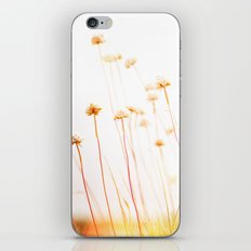 Beach Flora iPhone & iPod Skin