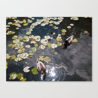 It's A Duck's Life Canvas Print