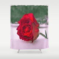 Winter rose Shower Curtain