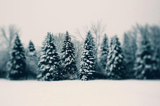 Winter & Woods Canvas Print