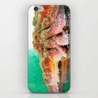 Sunflower Sea Star iPhone & iPod Skin