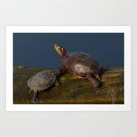 Two turtles Art Print