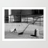 Stray Dog Art Print