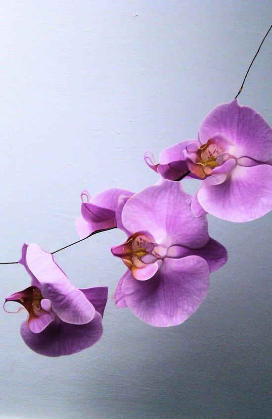 Ikebana Art Print