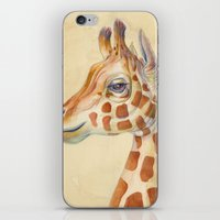 Giraffe #2 iPhone & iPod Skin