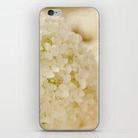 Vintage Nature Botanical White Hydrangea Flower Head iPhone & iPod Skin