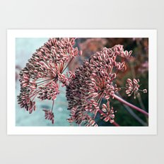 FLOWERHEAD - Botanical G… Art Print