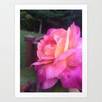 Roses in Rhode Island Art Print