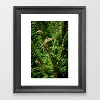 Ferns Framed Art Print