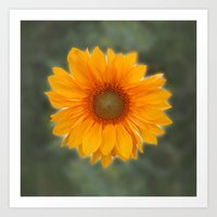 Single Sunflower Art Print