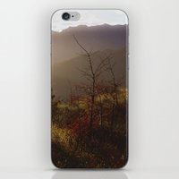 Wilding Pine iPhone & iPod Skin