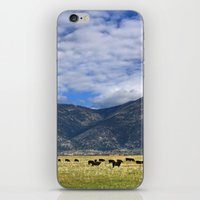 Field Of Cows iPhone & iPod Skin