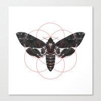 Sacred Death's-head Hawkmoth Canvas Print