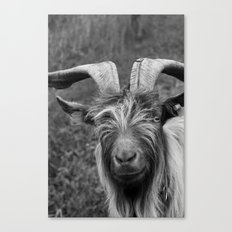 Billy-Goat no.1 Canvas Print