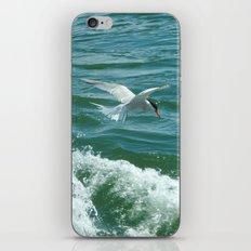 Common Tern iPhone & iPod Skin