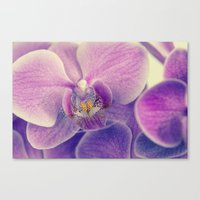 Orchid - Lilac Colored Canvas Print