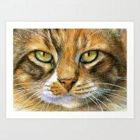 Calico Cat 817 Art Print