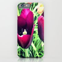 iPhone & iPod Case featuring Purple Tulips in Bloom by Allison corn