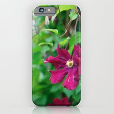 purple clematis flower iPhone 6 Slim Case