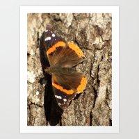 butterfly 2016 III Art Print