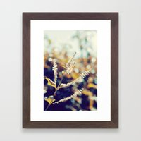 I sit in my garden, gazing upon a beauty that cannot gaze upon itself.   Framed Art Print