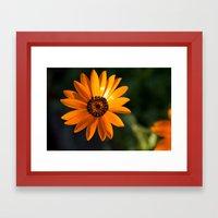 Vibrant Orange Flower Framed Art Print